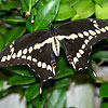 BEAUTIFUL BUTTERFLY: 